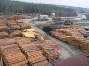 Предлагает к продаже лес - кругляк из России регионов Сибири!+